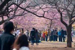 Japan Cherry Blossom Festival