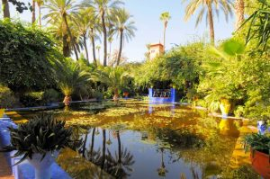 Unique Things to do in Marrakech