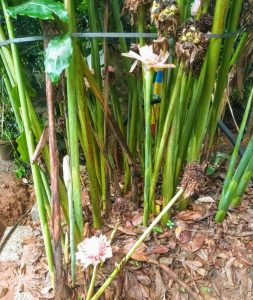 Spice Gardens Munnar